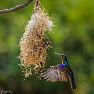 cute-bird-parents-381__300