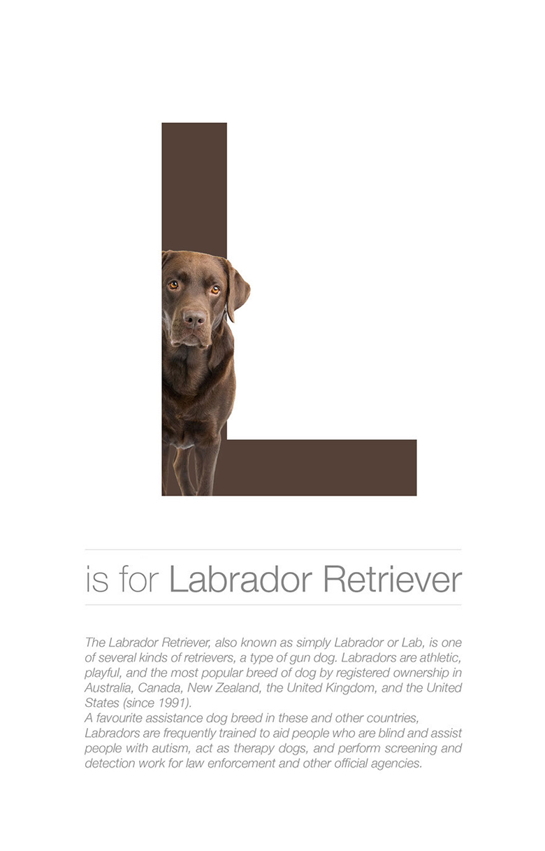 alphabetical-dog-breeds-labrador-retriever