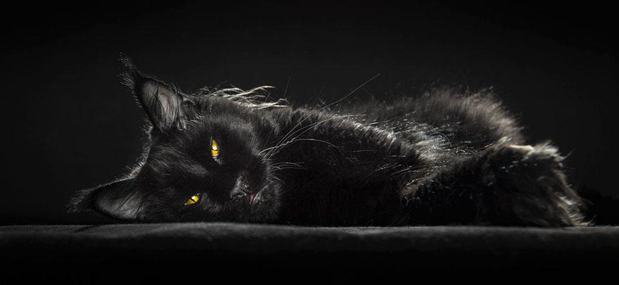 maine-coon-cat-photography-robert-sijka-38-57ad8efdf2044__880