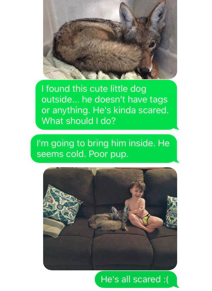 Husband-Freaks-Out-After-His-Wife-Texts-Him-She-Brought-A-Dog-Home-While-The-Pic-Shows-Its-Coyote-5842a5909048b